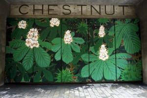 TREEWALK:chestnut santoleri